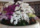 Bảy loài cây cảnh được khuyên dùng trong xây dựng thiết kế khách sạn